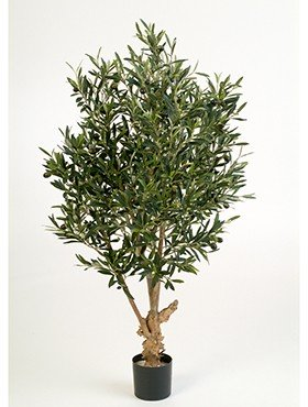 Natural twisted olive