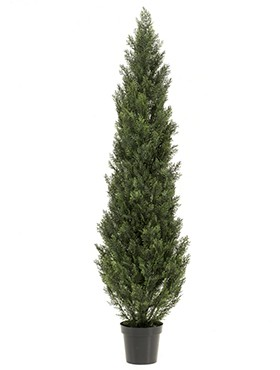 Cedar tree outdoor UV