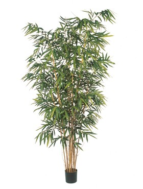 New bamboo big leaf