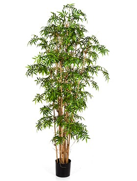 New japanese bamboo